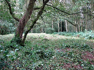 William of Norwich - Image: The site of St William's chapel in Mousehold Heath (geograph 2062004)