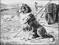 The world of animal life (1910) (20540991798).jpg