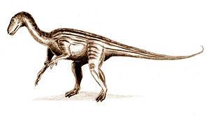 Zeichnerische Darstellung von Thecodontosaurus