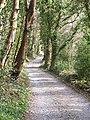 Track through woodland, Cornaa - geograph.org.uk - 762166.jpg