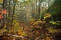 Trail (1584726570).jpg