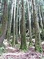 Trail around Sete Cidades, São Miguel island, Azores - panoramio - Eduardo Manchon (4).jpg