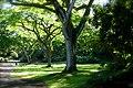 Tree 0027.jpg