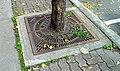 Tree guard - panoramio.jpg