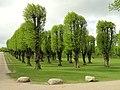 Trees - Frederiksberg Have - Copenhagen - DSC08925.JPG