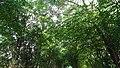 Trees in France Orne Departament Normandie 01.jpg