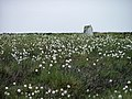 Trig. Point and Cottongrass, Loose Howe - geograph.org.uk - 190093.jpg