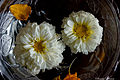 Two Daisies - Flickr - Swami Stream.jpg