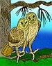 Bahaman Barn Owl