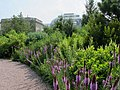 U.S. Botanic Garden in July (14789669012).jpg