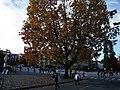 UBC一景 - panoramio.jpg