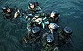 US Navy 080910-N-6552M-031 Crewman Qualification Training (CQT) students secure a simulated casualty to a spine board during a medical training scenario at Naval Amphibious Base Coronado.jpg