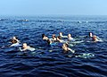 US Navy 090102-N-2908M-008 Sailors from the aircraft carrier USS Theodore Roosevelt (CVN 71) participate in a swim call.jpg