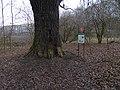 Uhříněves, hraniční dub u obory, kmen a cedule.jpg