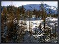 Una copertina di neve ci protegge fino a primavera. - panoramio.jpg