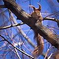 Up on a branch (49665056856).jpg