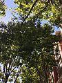 Urban Trees, Dublin, CA 3 2016-09-26.jpg