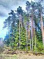 Valdaysky District, Novgorod Oblast, Russia - panoramio (3420).jpg