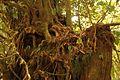 Vegetacion de Bosque Tropical en Costa Rica 013.jpg
