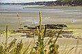 Verbascum pulverulentum-4474.jpg