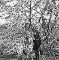 Vier kinderen in een bloeiende boom, Bestanddeelnr 252-1920.jpg