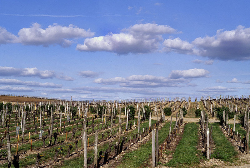 Tập tin:Vignes Figeac.jpg