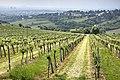Vineyards in Döbling 01.jpg