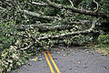 Virginia Guard soldiers clear fallen trees 110828-A--214.jpg