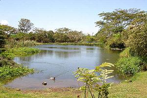 Instituto Nacional de Biodiversidad - View of INBioparque's lake.