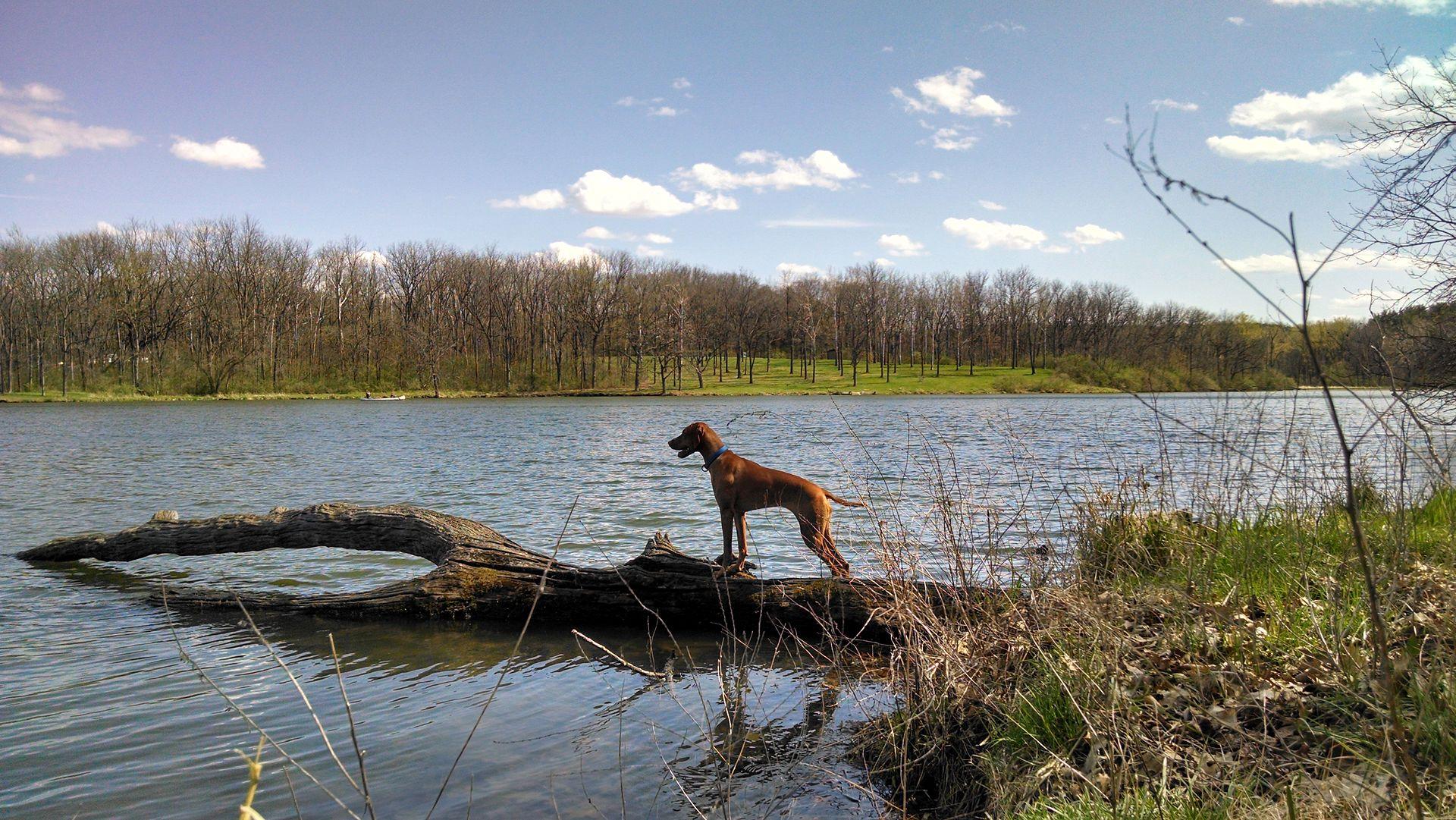 Lake County Dog Park Illinois