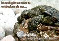 WIKIPEDIA-Werbung mehralssex.png