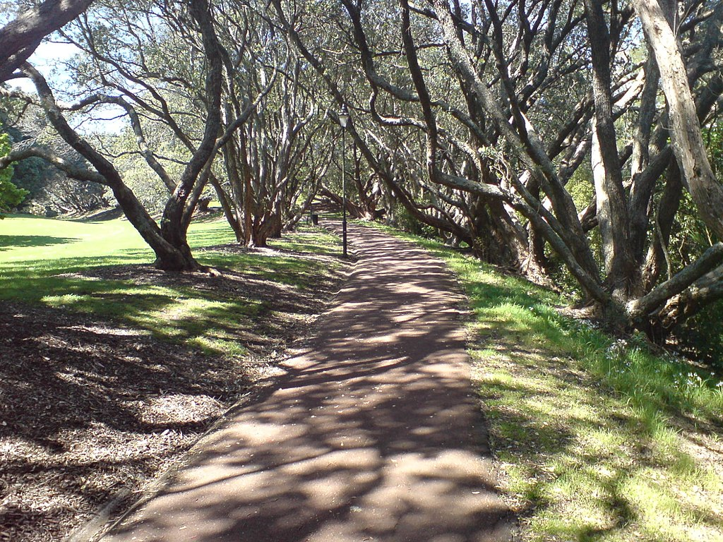 Walking Path In The Auckland Domain