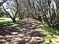 Walking Path In The Auckland Domain.jpg