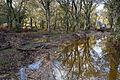 Warwickslade Cutting, surface water - geograph.org.uk - 1584442.jpg