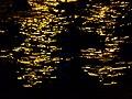Water texture 1380997 Nevit.jpg