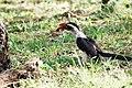 Western Serengeti 2012 06 02 3972 (7557775128).jpg