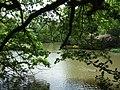 Westwood Lake - geograph.org.uk - 175925.jpg