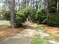 Whitehead Camellia Trail Exit East near S Trailhead.JPG