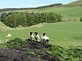 Who said 'pass the mint sauce^' - geograph.org.uk - 1284974.jpg