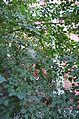 Wikimeetup90 456.jpg
