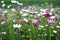 Wildflowers in Lishui.jpg