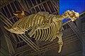 Wildlife Panorama, National Museum of Scotland (7008289611).jpg