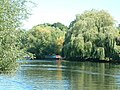 Willows on the Avon - geograph.org.uk - 820412.jpg