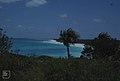 Windswept North coast looking East. Little San Salvador (24005031267).jpg