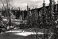 Winter- Park Valentine (6990913482).jpg