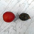 Wodyetia bifurcata fresh seed and fruit 02.jpg