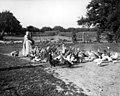 Woman feeding chickens, Oakville. - 1904 (21475993095).jpg