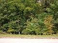 Woodland near White Cross Roundabout - geograph.org.uk - 1552203.jpg