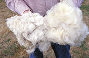 Long and short hair wool at the South Central Family Farm Research Center in Boonesville, Arizona