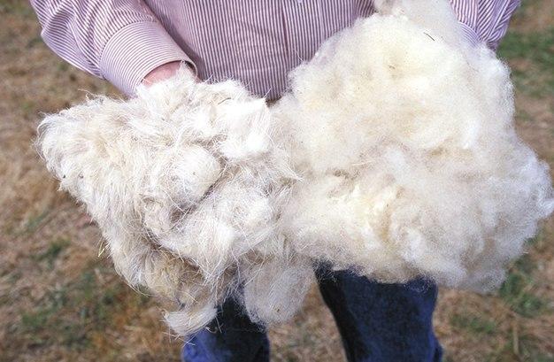 Wool.www.usda.gov